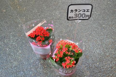 DSC_0121 (640x427)
