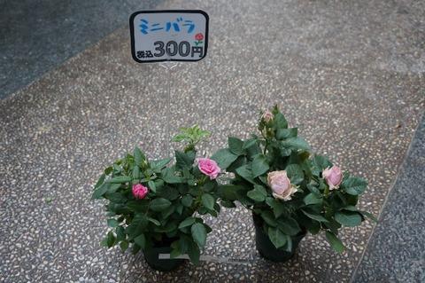 DSC09155 (640x425)