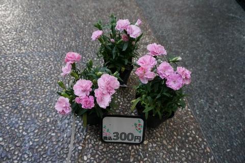DSC08647 (640x425)
