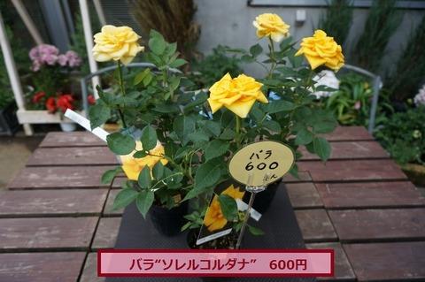 コルダナ1 (640x425)