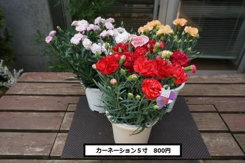 DSC00885 (640x425)