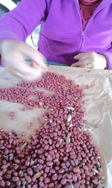 小豆を選る