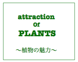 attraction of PLANTS!!! Lady Bird さんが来てくれるよ!