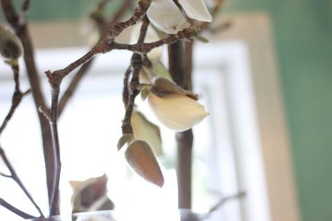 * 木蓮 (Magnolia) *