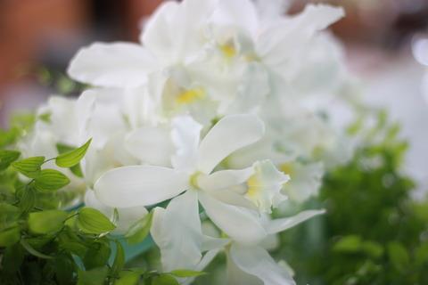 暑い日には清涼感があるお花を♪カトレア