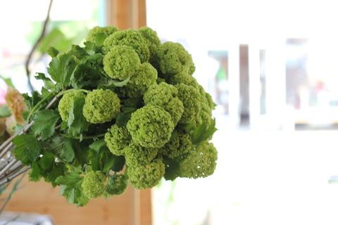 グリーンのもこもこ!ビバーナム(´∀`*)花束にしてみました♪