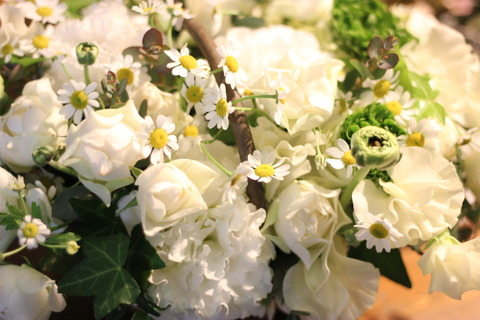 * flower white day *