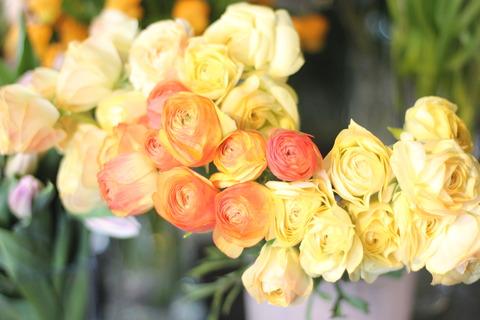 * 色とりどりのお花たち *