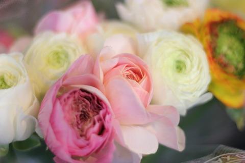 ** 春のお花が増えました **