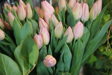 * 春のお花が入荷しました *