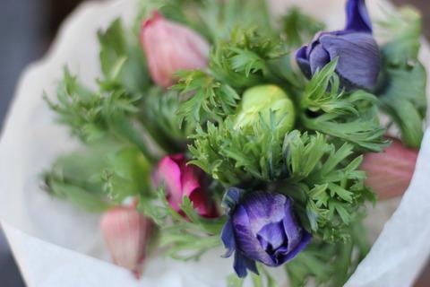 * 20束限定 Anemone Bouquet *