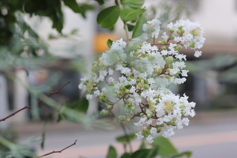 純白の揺れる花びら