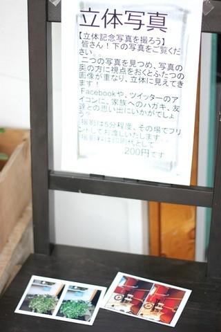 本日ネコヤド商店街!