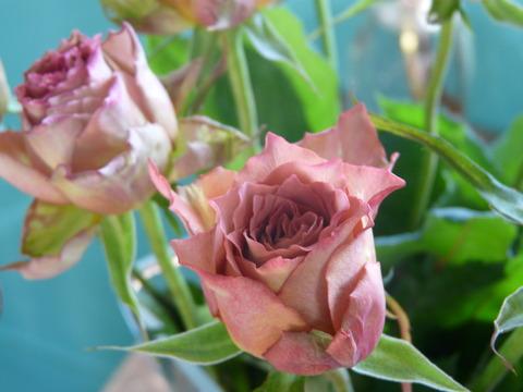 おはようございます! お花の入荷情報♪
