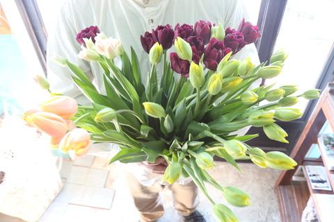*Tulip Week*開催します!