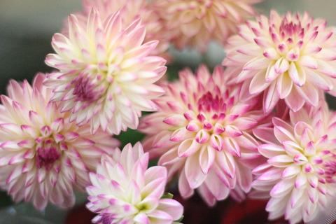 ⋆愛らしい花姿の花たち⋆