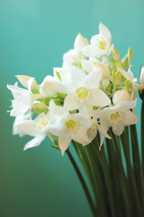 ブライダルブーケに人気のお花(*´▽`*)