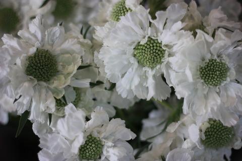 グリーン系のお花♪