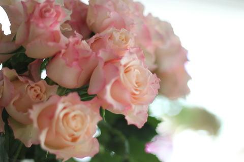 入荷情報 素敵なバラとちょっと変わったカーネーションの仲間♪