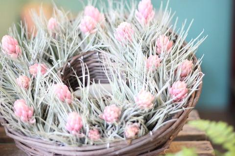 チランジア*花つき*