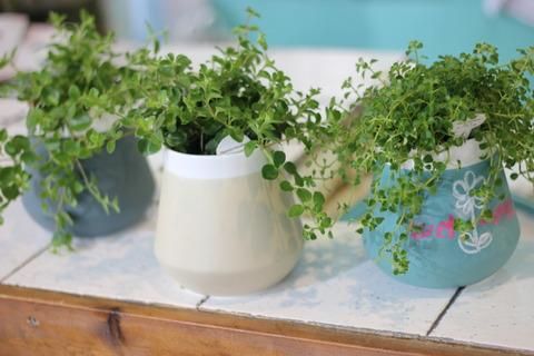 人気のチョークで書ける観葉植物のポット入荷しました♪