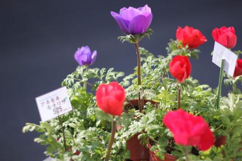 春の花続々♪(鉢物編)