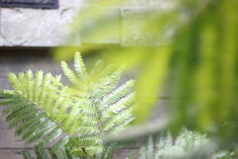 *.:*:. Green green Green .:*..*