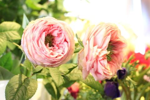 新品種バラ「テアトロ」