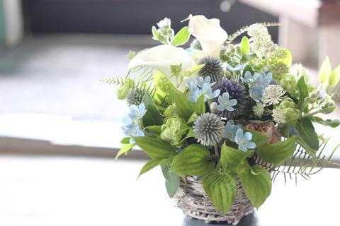 瑠璃唐綿の花の色