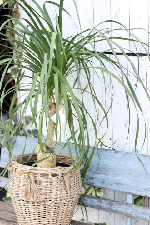 観葉植物vol.3