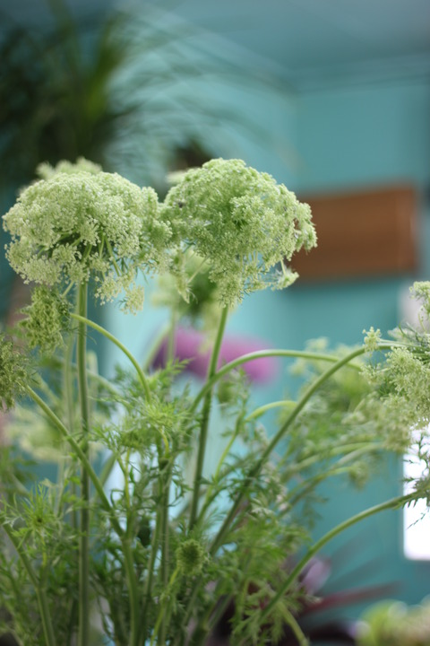 ニンジンの花!キャロットフラワー♪