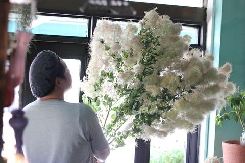 *smoke tree  - white fur -*