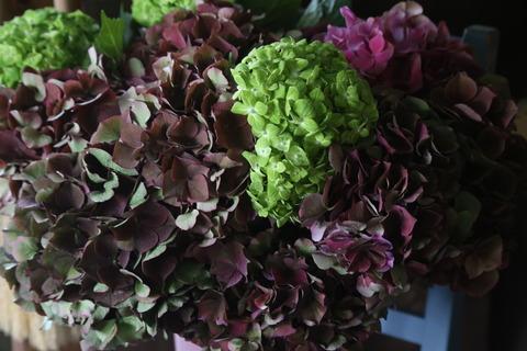 シックな紫陽花が入りました♩