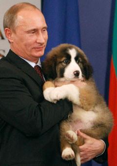 putin-dog-240