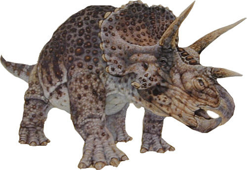 100826largetriceratops