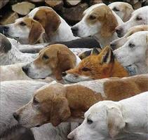 fox-hunt