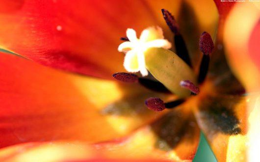 00066_tulipsfest_1920x1200