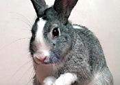 rabbitST240406_175x125