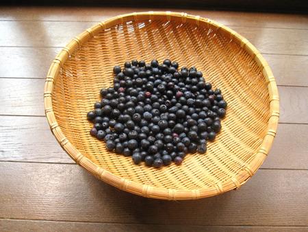 ブルーベリー1