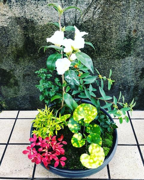 冬の寄せ鉢