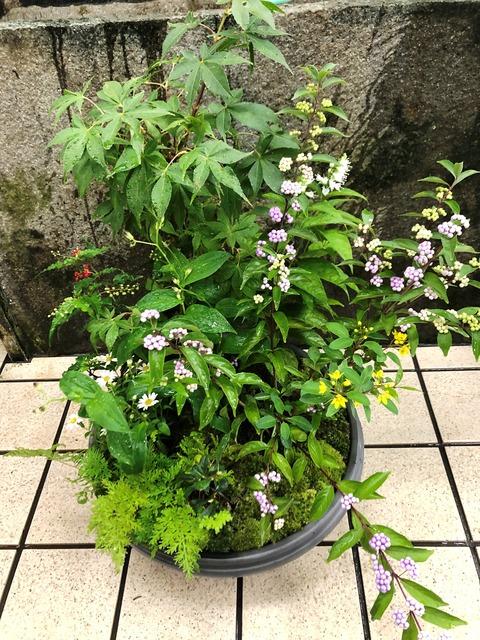 山野草寄せ鉢9種