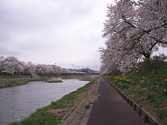 09-04-20夏井川千本桜