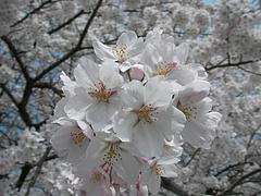 09-04-13飯野町・千貫森公園 アップ