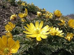 09-04-07福寿草