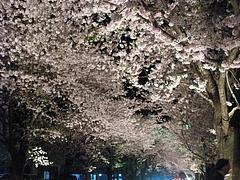 09-04-13富岡町・夜ノ森公園 ライトアップ