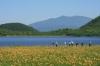 08-07-02雄国沼のニッコウキスゲ