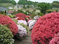 09-05-11須賀川・大桑原つつじ園