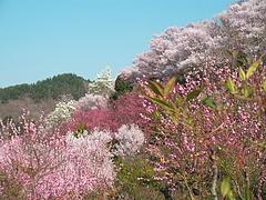 09-04-09花見山