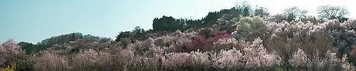 09-04-09花見山パノラマ