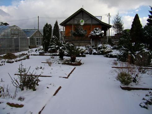 積雪のガーデン
